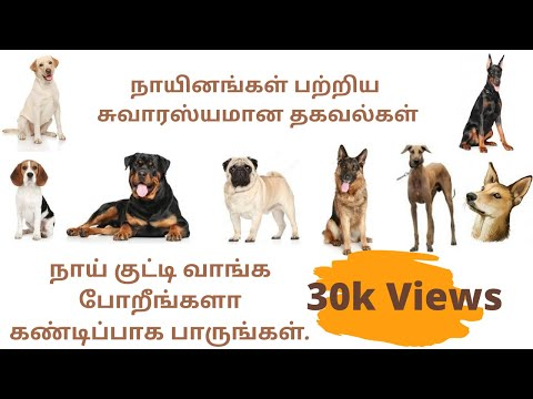 dogs-buying-guide-|-how-to-select-a-dog-breed-|-dog-breed-nature-|-தமிழ்-|-in-tamil-|