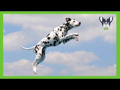 BEST OF DOG HIGH JUMP