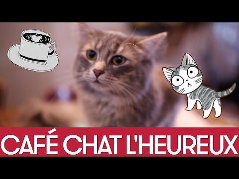 Montréal, l'amie des chats!