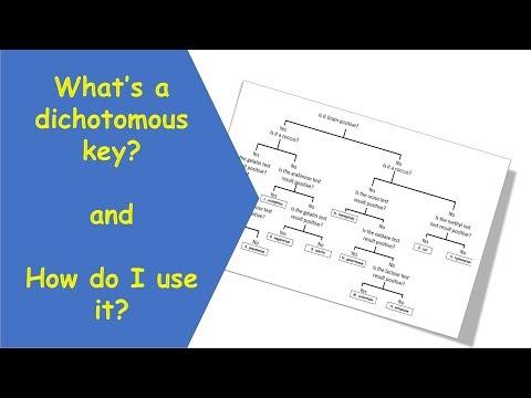 Dichotomous Key Tutorial Video
