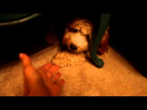K9 Advantix is poison..watch both of my dogs react
