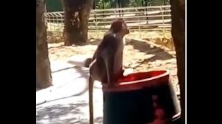 Types of monkeys / apes primates in wild jungle forest park l shri hari