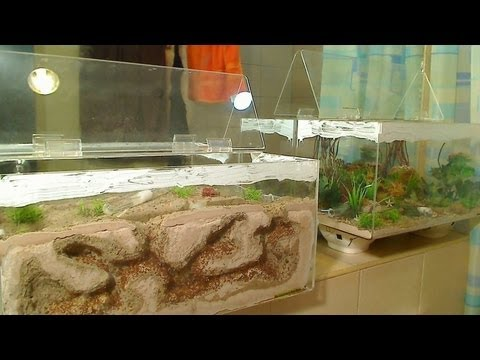 Moving a Mature Ant Colony into an AntsCanada Habitat Nest 3D™