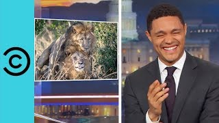 kenyan politician wants to give counselling to two gay lions   the daily show