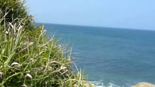 鵜の岬にて 野生のイルカと遭遇