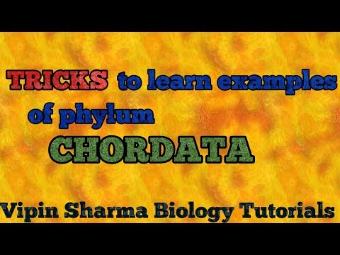 Tricks to learn examples of CHORDATES for NEET , JIPMER and AIIMS .