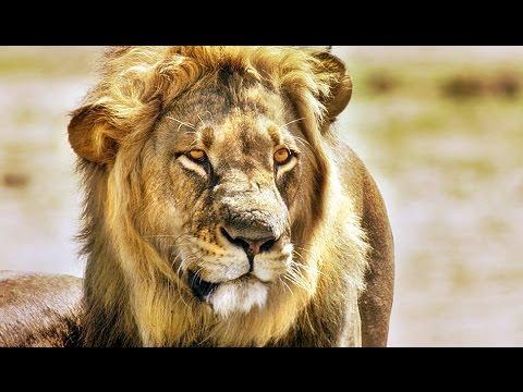 Afrika Das Magische Königreich Stream