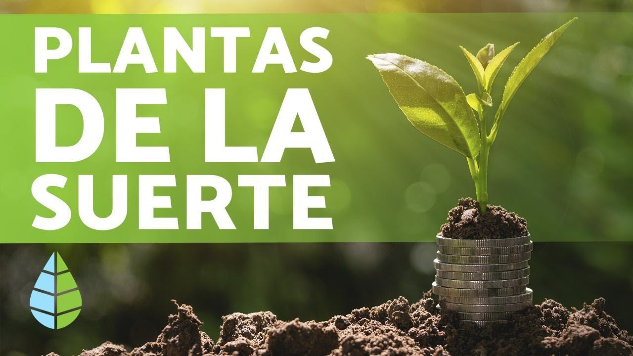 Plantas Para La Buena Suerte Alegría Dinero Y Felicidad Youtube