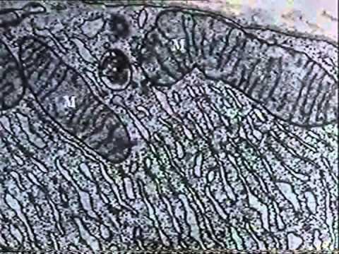 The Cytoplasm