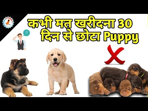 कभी-मत-खरीदना-30-दिन-से-छोटा-puppy-/-new-puppy-tips-/never-buy-puppy-little-by-30-days