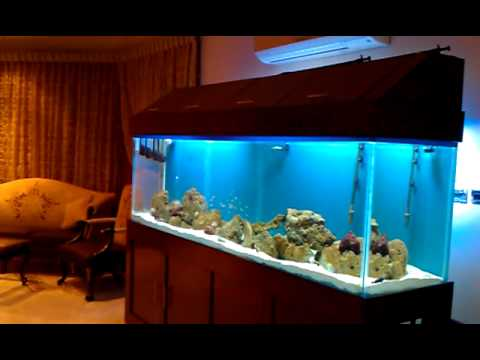 1000 liters aquarium youtube. Black Bedroom Furniture Sets. Home Design Ideas