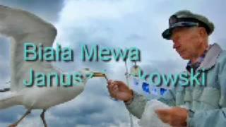 Biała Mewa