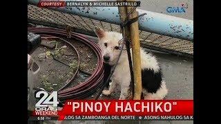 24 Oras: Pinoy Hachiko na 2 araw nang tila may hinihintay malapit sa bangko, nailigtas sa Rizal