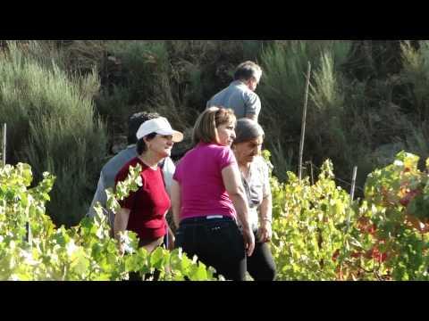 colheita uva  fabricação vinho Vilarinho das azenhas 2