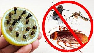 Pon Esto En Tu Casa Y No Habrá Más Moscas, Cucarachas Y Mosquitos