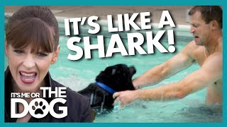Can Canine 'Jaws' Learn to Stop Attacking Swimmers? | It's Me or The Dog