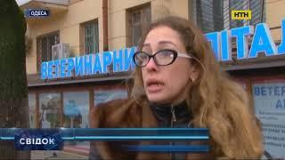 Расчлененный труп собаки без внутренних органов и головы нашли в Одессе