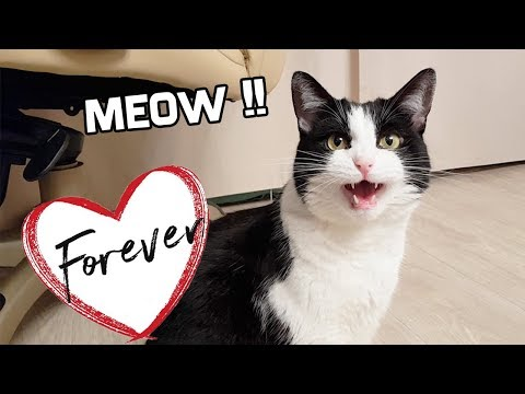 Sweet Meow Forever !!