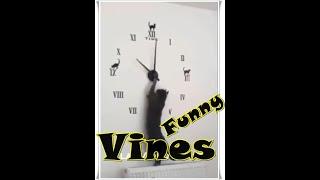 Funny Vines,cat vines, yaramaz kedi, Sevimli kedi