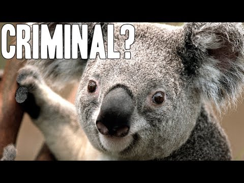 11 Insane Animal Facts