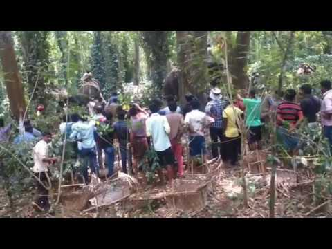 Elephant Hunting in coorg(Madikeri)Kodagu