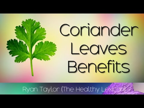 Coriander Leaves: Benefits and Uses (Dhania/Cilantro)