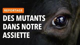 REPORTAGE : DES MUTANTS DANS NOTRE ASSIETTE