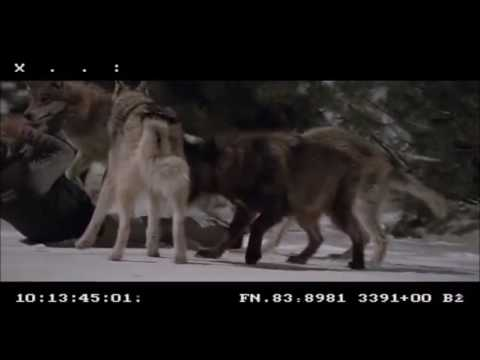 Frozen 2010 Uncut Wolf Attack