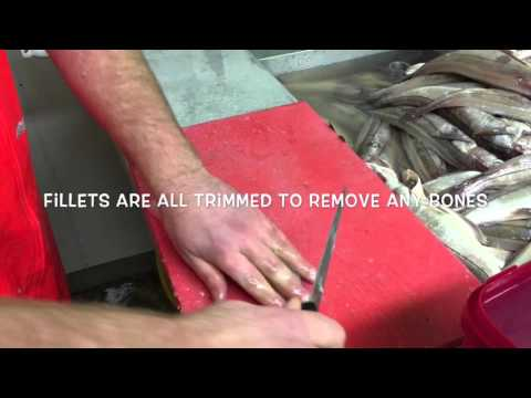 Filleting fresh Scottish haddock in Pittenweem
