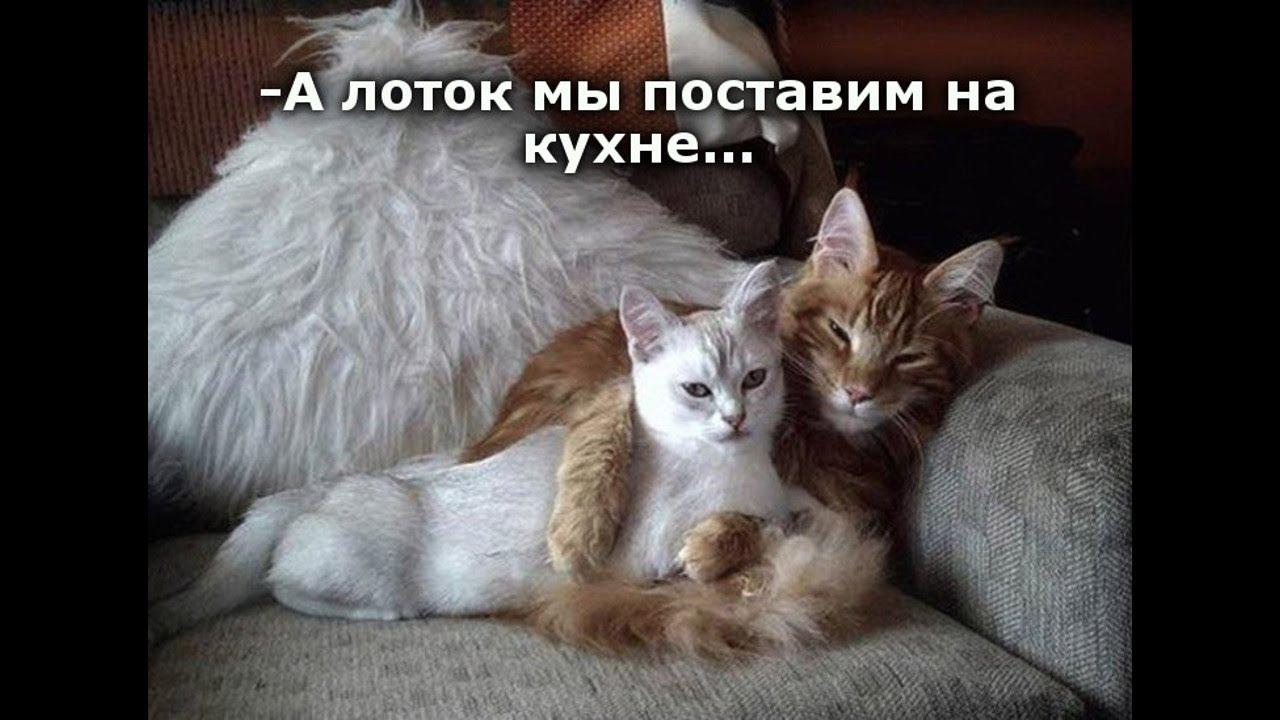 Веселые картинки. Кошки приколы самые смешные. Коты приколы.