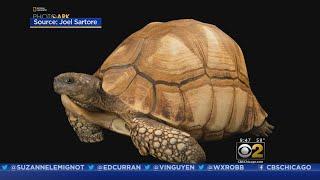 CBS 2 Saturday Morning News