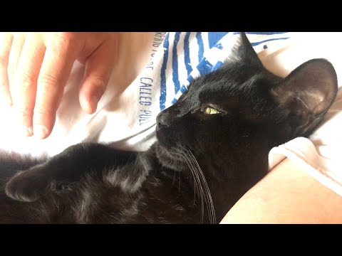 愛猫が添い寝してくれたら疲れなんてどっかいっちゃう Cuddle with my cute cat