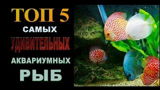 ТОП 5 самых удивительных аквариумных рыб