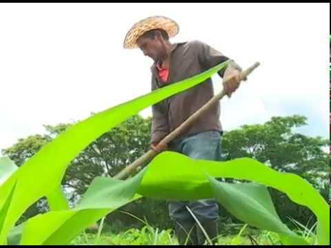 Video de Niceto Pérez