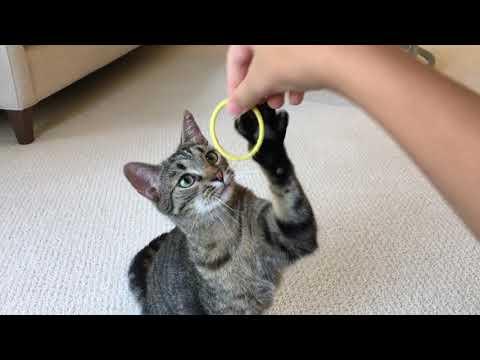 Funny & Cute Cat Video!