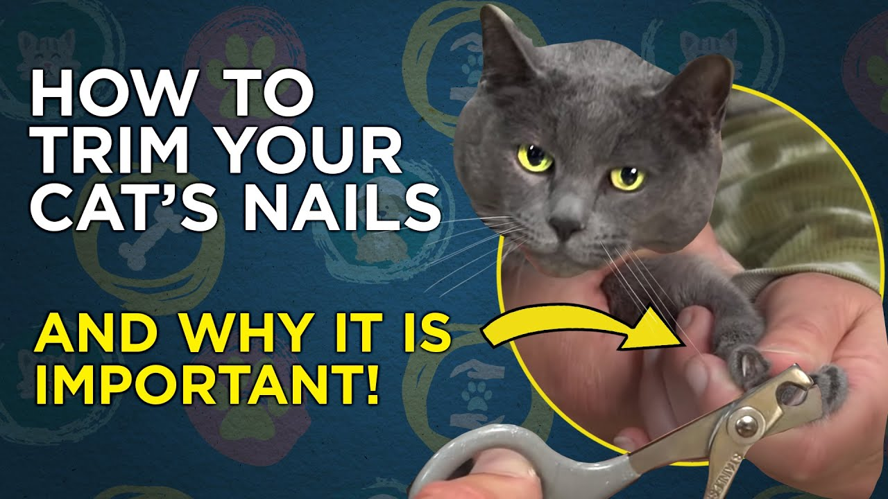 how to trim your cat s nails [ 1280 x 720 Pixel ]