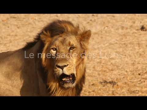Message des Lions pour les humains.