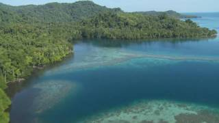 Wild New Britain: Papua New Guinea