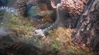 Feeding Reptiles San Antonio Zoo