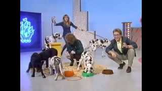 BBC One - Blue Peter - Funny dogs 1987
