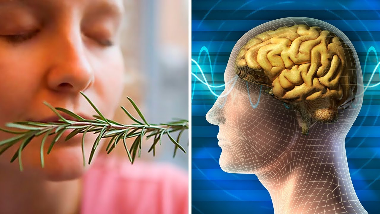 Sniffing Rosemary Can Increase Your Memory By 75%, Study Finds
