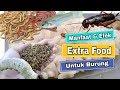 Manfaat Dan Efek Extra Food Ef Untuk Burung Kicau  Mp3 - Mp4 Download