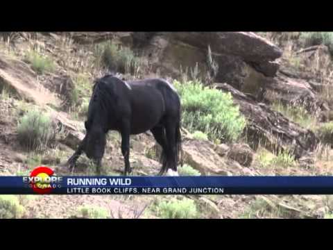 Explore Colorado  Search For Wild Mustangs In The Little Boo
