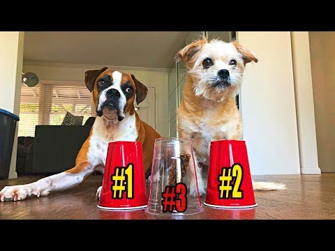 Rescued Dogs IQ Tested: Try not to laugh 😂🐶 funny animal