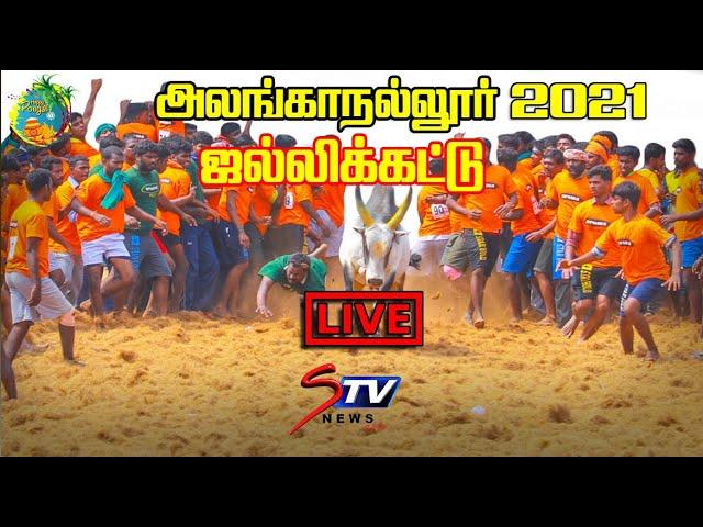 🔴LIVE : Alanganallur Jallikattu 2021 | jallikattu LIVE  |அலங்காநல்லூர் ஜல்லிக்கட்டு | |STV