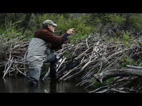 Beaver Pond Fly Fishing Approach Strategy Utah