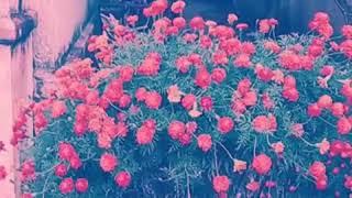 Flower love creation