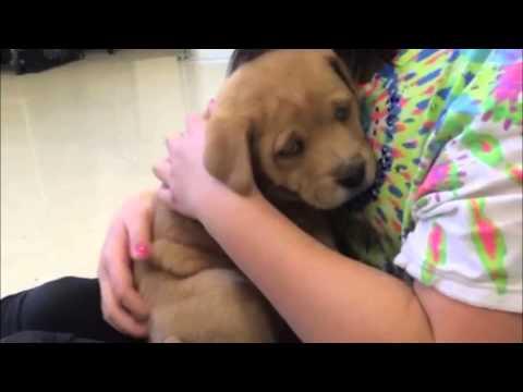 Furkids/Small Dog Rescue - Lara
