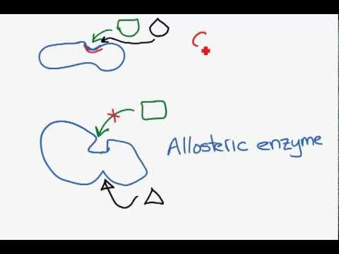 Competitive and non-competitive inhibition.mp4