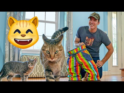 Crazy Cat Pants Review | Weird Cat Products Found on Amazon